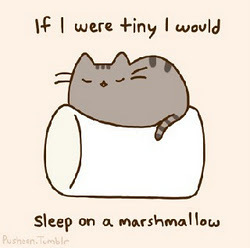 cat marshmellow